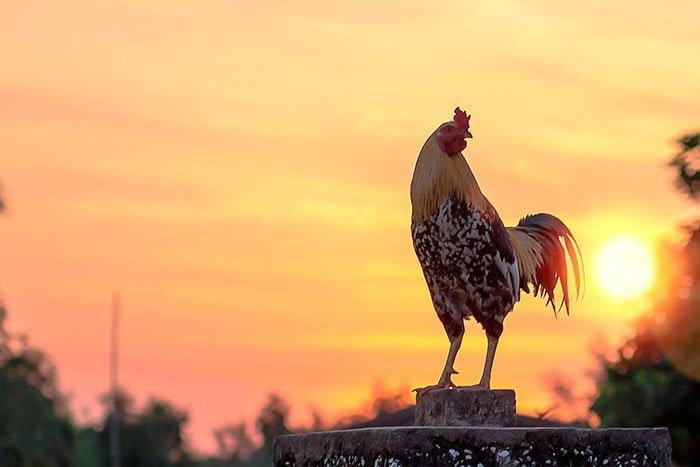 La Resilencia y los gallos con insomnio - Ignacio Isusi